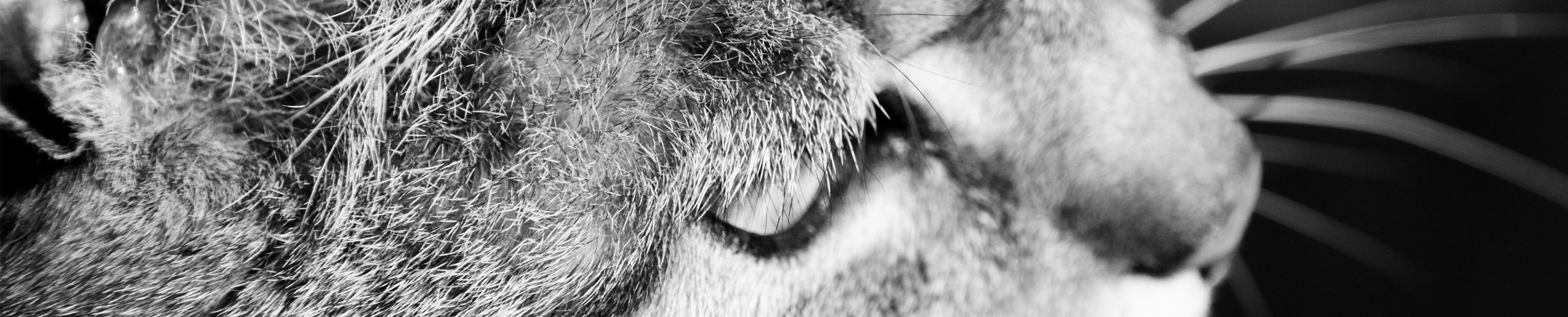 Film Tiere